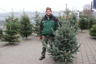 Henrik Ziegenhain als Weihnachtsbaumverkäufer